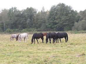 Photo: BA010180 Janow Podlaski - stadnina koni