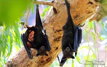 Photo: Bats in Windjana Gorge National Park, Kimberley, Western Australia