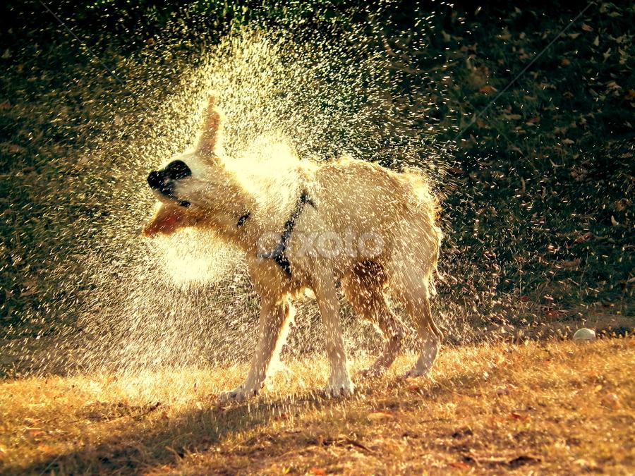 by Игор Ђорђевић - Animals - Dogs Portraits