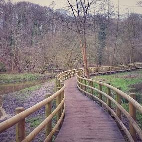 Wepre Park UK by Katarzyna Najderek - Landscapes Forests ( #weprepark #walk #nature )