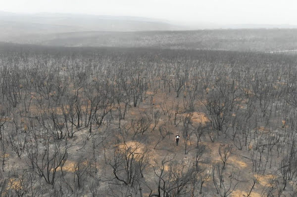 Aerial view of a burned forest