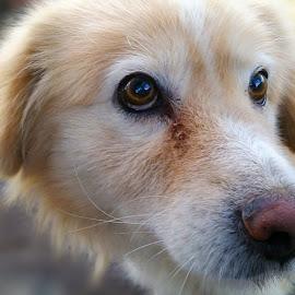 Beautiful eyes by Ruxandra Proksch - Animals - Dogs Portraits ( animals, dogs, pet, stray, cute, dog, nose, animal, eyes, eye )