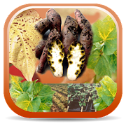 App Icon for Sweetpotato DiagNotes App in Czech Republic Google Play Store