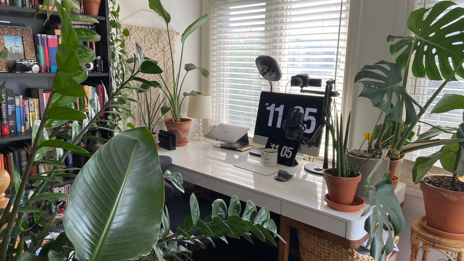 Remote work office setup in front of window with video camera over monitor and surrounded by many green plants