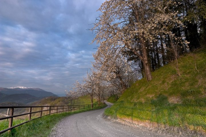 la collina dei ciliegi di KAPOS