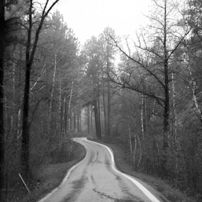 Custer State Park by Gayle Mittan - Black & White Landscapes ( foggy, forest, pine tree, winding road, aspen, state park, trees, winding, road, south dakota, one lane, pine trees, black and white, park )