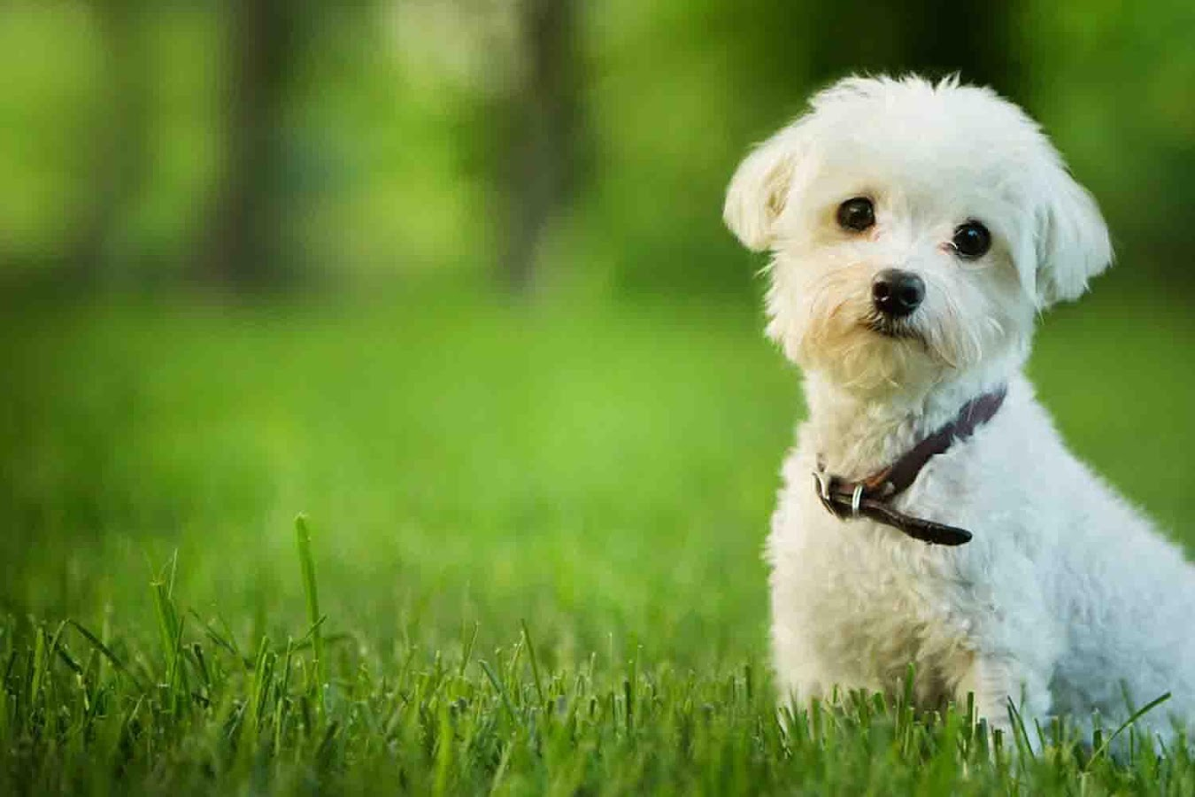 Dogs Wallpaper white dog wallpaper - android apps on google play