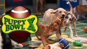 Puppy Bowl X thumbnail