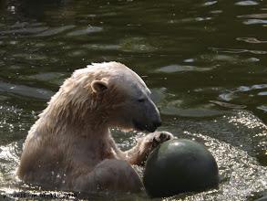 Photo: Sie hat Spaß mit dem Spielzeug :-)