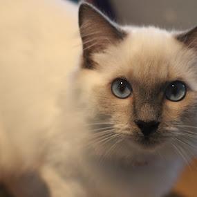 by Mellissa Flynn - Animals - Cats Kittens (  )
