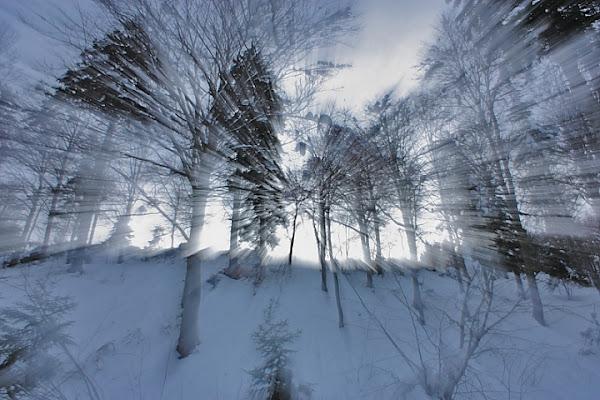 Luce nel bosco di Alessandro Remorini