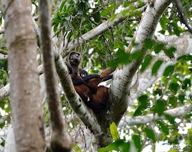 Photo: Spider Monkeys @ Bosque del Cabo Lodge, Osa Peninsula