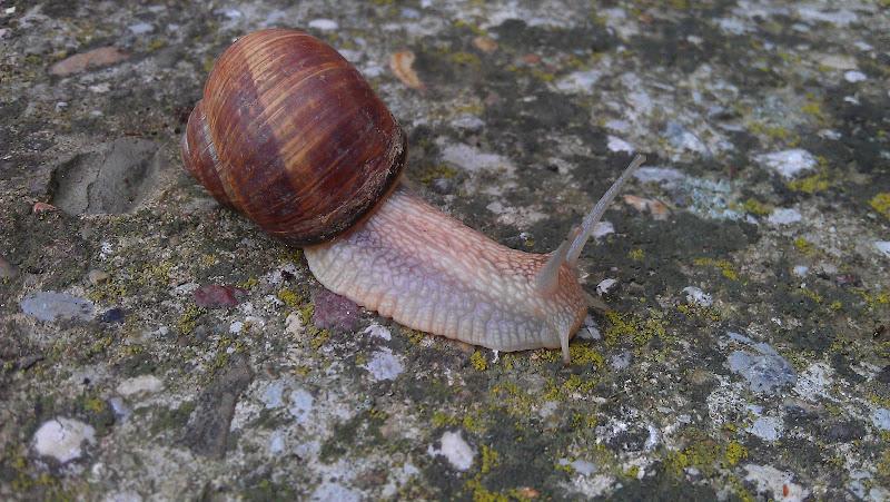 Photo: Speeding snail