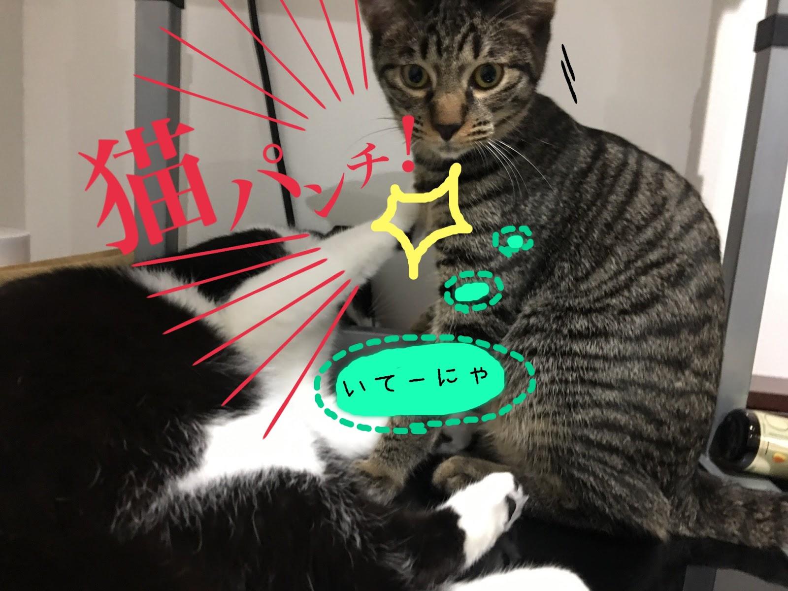 段ボール大好き猫