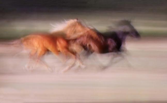 ...come cavalli in corsa di roberto-copeta