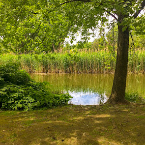 The Woburn wonder by Raymond Fitzgerald - Landscapes Waterscapes ( boston, usa, green, waterscape, trees )