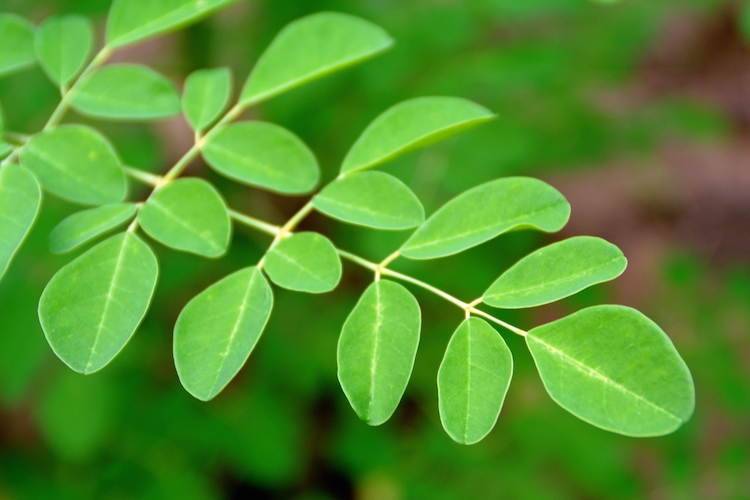 A Spoonful Of This Miracle Plant Can Replace A Whole Serving Of Vegetables