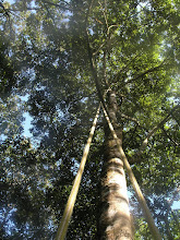 Photo: Climbing into the canopy.