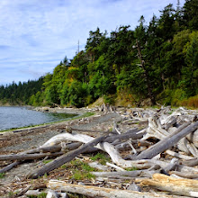 Photo: All the islands had lots of driftwood on their shorelines.