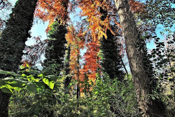Giardino d'autunno. di Daimon