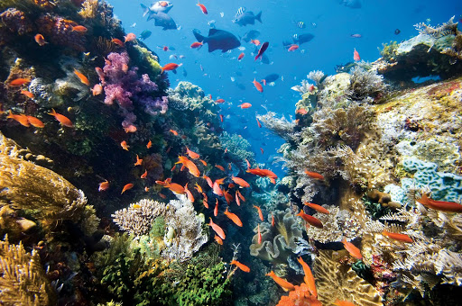 Dive the reefs of Tonga to view colorful schools of tropical fish.