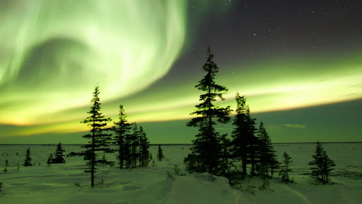 The Northern Lights in Winter, Churchill, Manitoba, Canada.jpg