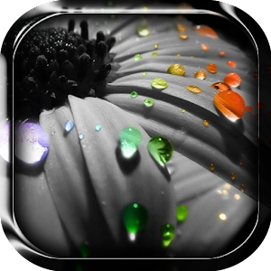 Free Apk android  Rain Live Wallpaper 1.0  free updated on