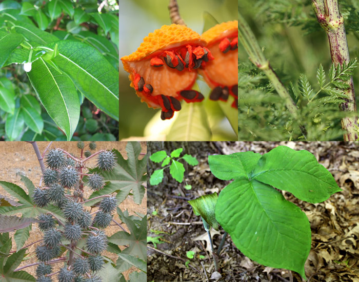 poisonous-plant-signs.jpg