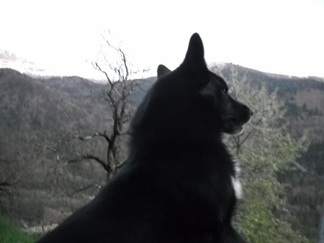 Nos loups grandissent, postez nous vos photos - Page 5 DSCN5488