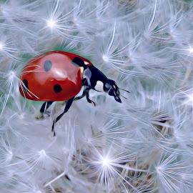 by Ksenija Glavak - Digital Art Animals (  )