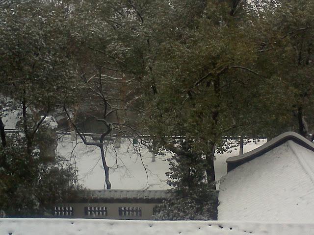 自己在家里用手机拍的雪景