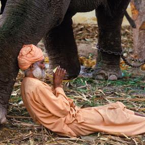INDIA - Elephant man by Roberto Nencini - People Street & Candids