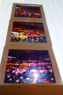 Flowers di Barbara Palombi