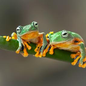 Couple by Robert Cinega - Animals Amphibians