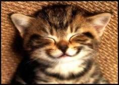 [Smiling_Cat.jpg]