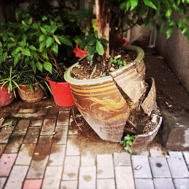 Hong Kong, Sidewalk, Broken, Pot,  香港, 行人路, 爛, 花盆