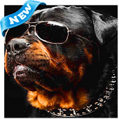 Rottweiler Wallpapers