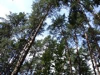 Стежками рідного краю - Лісова казка