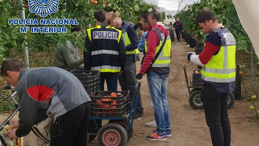 Policía Nacional interviene en una explotación agraria.