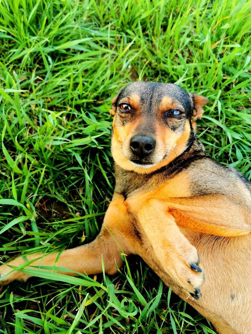 Vita da cani di vituccio99