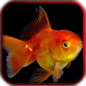 3D Fishes Video Live Wallpaper