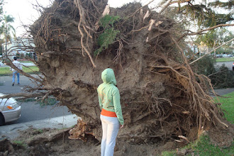 Photo: Huntington Drive between Baldwin and Rosemead was a disaster; dozens of large trees on westbound side came down. From the morning after the storm.