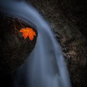 Autumn creek. by Per-Ola Kämpe - Landscapes Waterscapes ( autumn, waterfall, creek, fall, leaf, rocks,  )