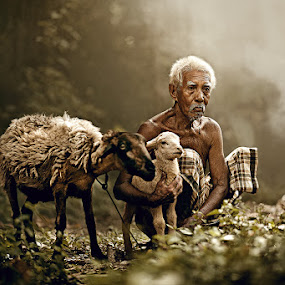 OLD MEN & SHEEP by Abe Less - People Portraits of Men ( senior citizen )