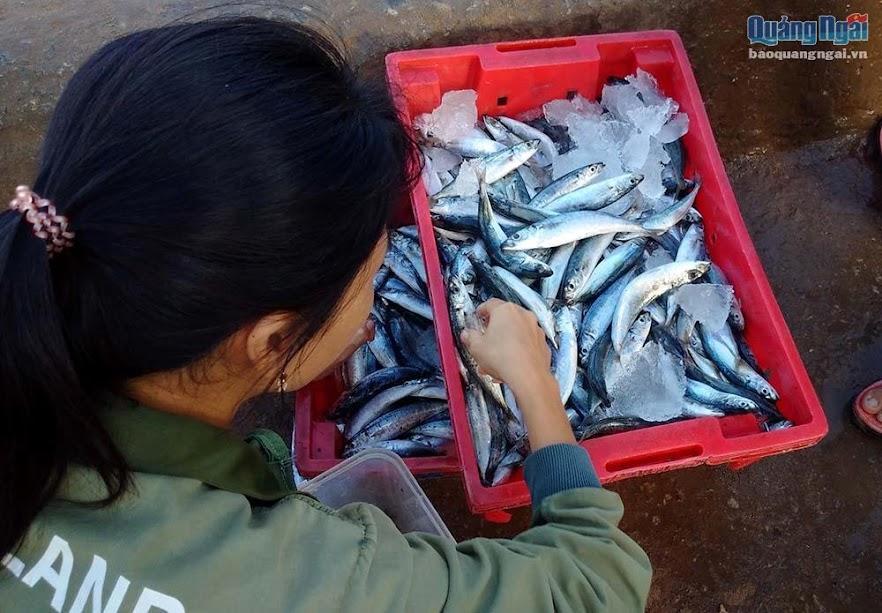 Phần lớn cá được đánh bắt quanh đảo nên khá tươi ngon.