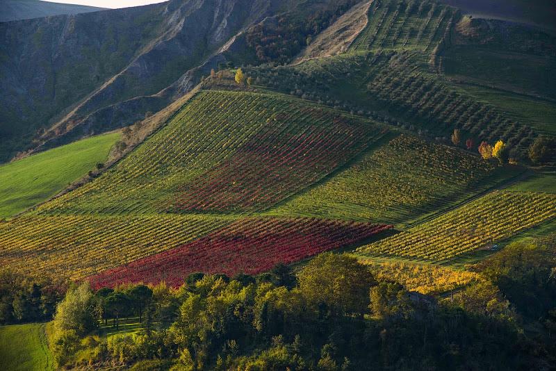 agricoltura multicolor di walterferretti
