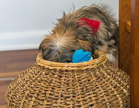 Photo: Ruby looking through her toys in a basket - five months