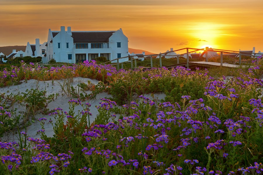 Spring by the sea by Johan Mocke - Landscapes Sunsets & Sunrises ( thatched, sunset, dune, spring, boardwalk )