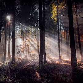 Foggy morning by Cristi Rus - Landscapes Forests ( foggy, sunrays, trees, forest, morning )