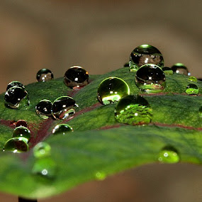 Morning Dews by Edwin Yepese - Novices Only Macro ( macro )